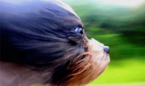 dog-gocache-cdn